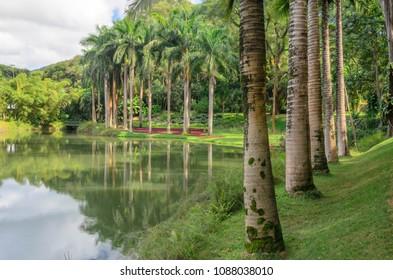trees reflected in water mirror at Inhotim Institute in Minas Gerais, Brazil