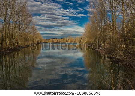Trees reflecting in a lake