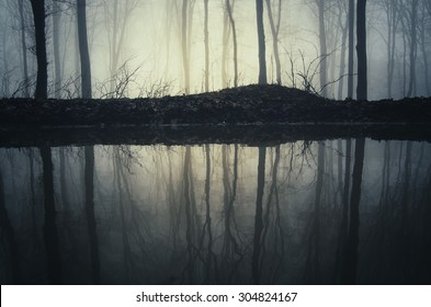 trees reflecting in water in forest