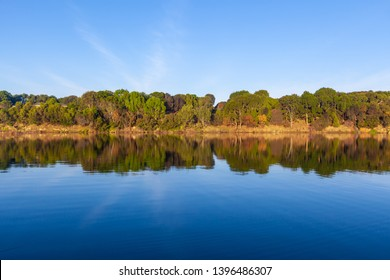 Trees reflecting in water under vivid blue sky with copy space