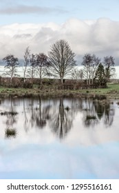 Trees reflection in Lake and Farm field in Strangford, Northern Ireland, UK
