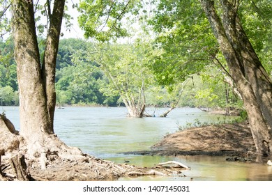 Trees in River Bank on Sunny Day
