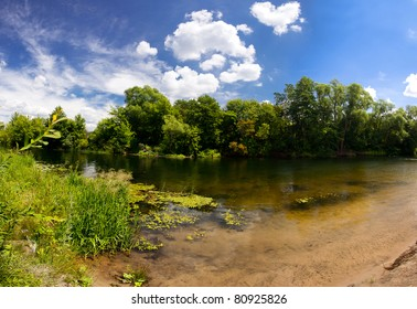 Trees in the river, summer landscape with blue sky