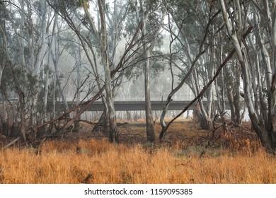 trees at the riverside, Murrumbidgee River
