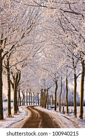 Trees and road in a cold white winter landscape