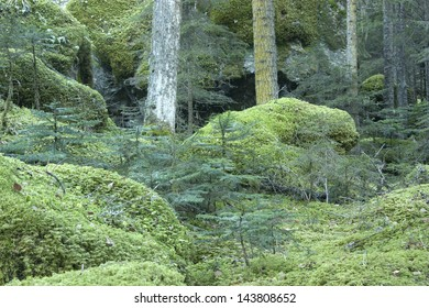 The trees and rocks covered with moss in moist highlands