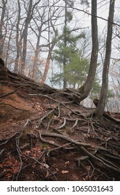 Trees and Roots in the Forest