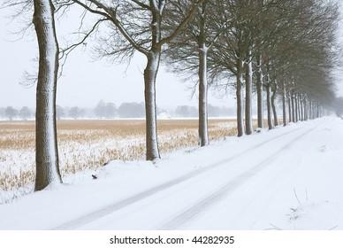 Trees in a row near a field
