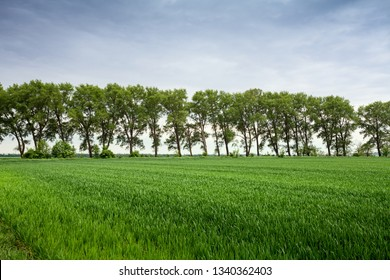 Trees in a row on green field