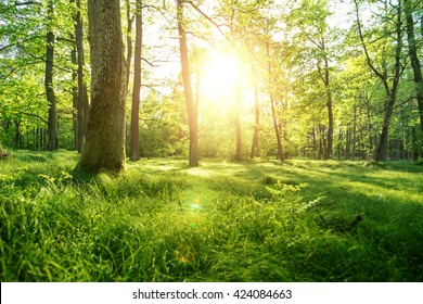 Trees with shadows in forest against of sunshine