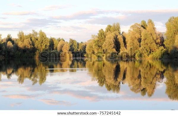 Trees shadows in the lake