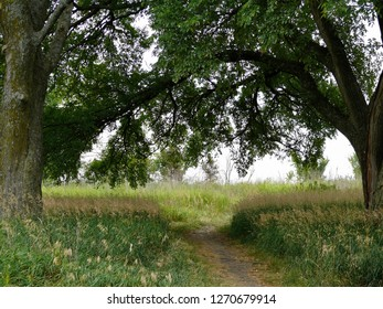 Trees Sheltering Pathway