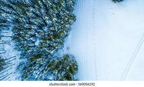 Trees shot from above with a drone during the Swiss winter