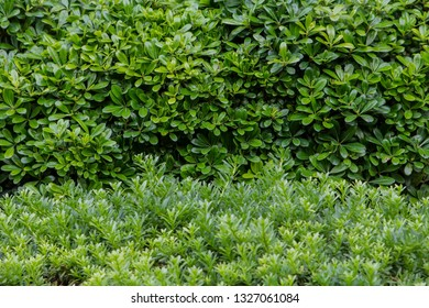 trees and shrubbery