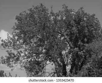 The trees, shrubs, and general flora of the valleys and countryside of the Polis area of Cyprus.