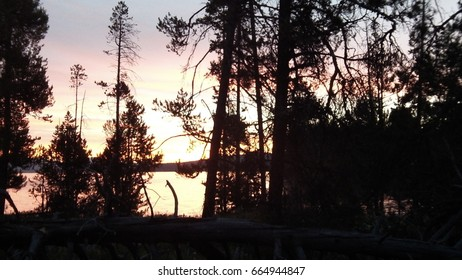 trees in silhouette on lake