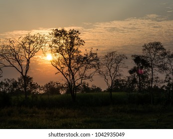 trees silhouette on open field at sunset