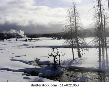 Trees in silhouette and steam from thermal pools - Yellowstone National Park, USA, in winter