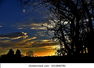 Trees silhouetted against an evening sky