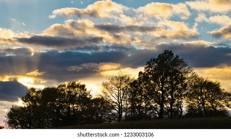 Trees silhouetted against the evening sky