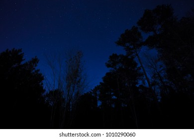 Trees silhouetted against a star filled sky in North Carolina