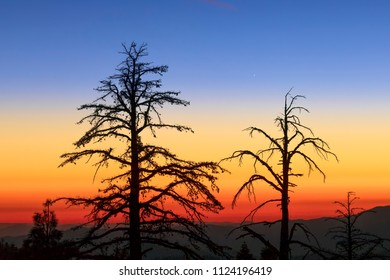 Trees are silhouetted by a beautiful and dramatic sunset on Tioga Road in the high country of Yosemite National Park, California, USA.