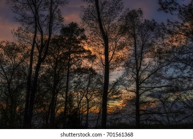 Trees Silhouetted in the Evening Sky
