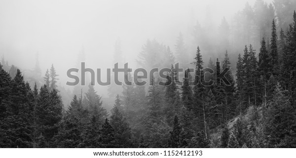 Trees silhouetted in the morning mist and fog on the mountains