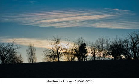 trees silhouetted on the horizon with wispy clouds after sunset