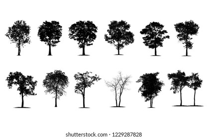 Trees in silhouettes. Create many more trees with leaves.  The collection of silhouettes trees.