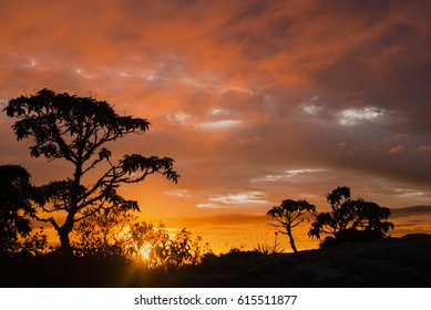 Trees silhouettes at dawn in Brazil