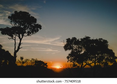 Trees silhouettes at sunset in Brazil