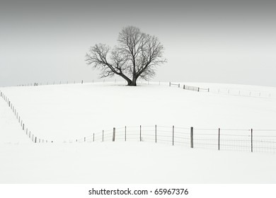 A trees sits on top of a hill in the middle of a pasture, which is filled with snow on a cold winter day.