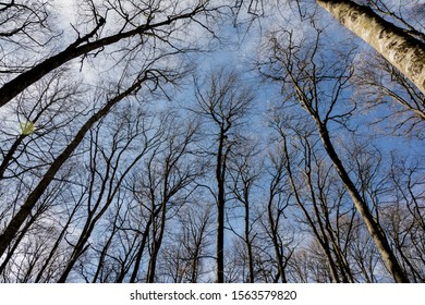 The trees and  the sky