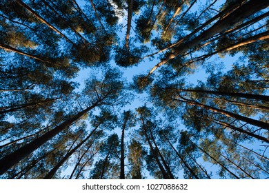 Trees and Sky Only in Colorful Graphical Perspective