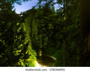 Trees and a small lake in Capilano Park, Vancouver, British Columbia, Canada