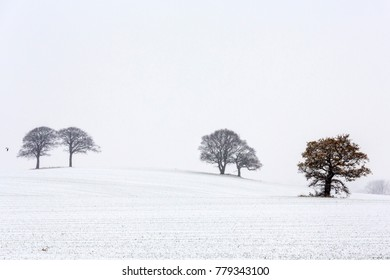 Trees in snow 3
