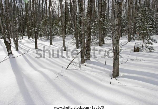 Trees in snow covered forest.