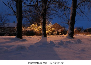 Trees in the snow illuminated by a lantern