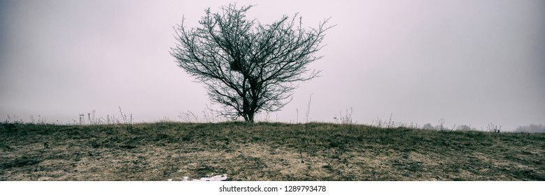 trees and snow in a meadow on a foggy day, panoramic landscape. Early spring. Web banner for design. Ukraine. Europe.