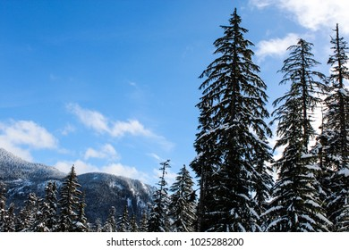 Trees with snow in teh mountains on a sunny winter day
