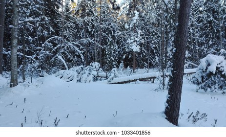 trees, snow and winter
