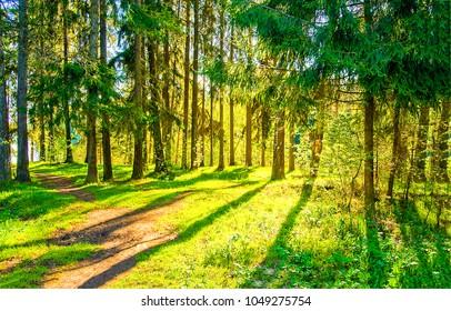 Sonnenstrahlen im Frühling
