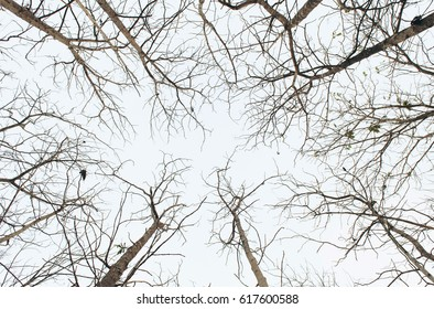Trees in springtime without leaves in forest