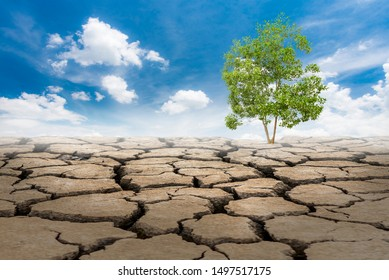 The trees sprout from arid soil and have a clear sky as the background. global warming. A barren land with only one tree left.