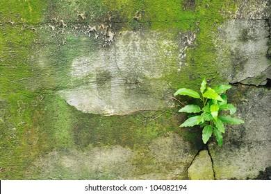 Tree's sprout push through concrete