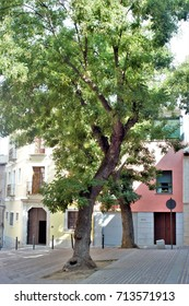 trees in a square of Toledo,