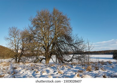 Trees stand out in the low winter sun and look golden against the snowy conditions and clear blue sky, of a very cold Clunie Loch in Perthshire, Scotland.
