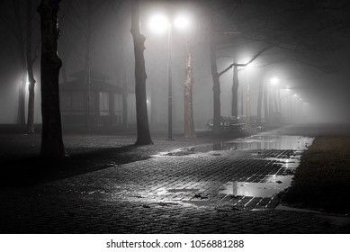 Trees and street lamps on a quiet foggy night following a rain shower in a northeastern USA public city park.