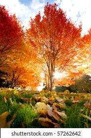 Trees with sunbeam